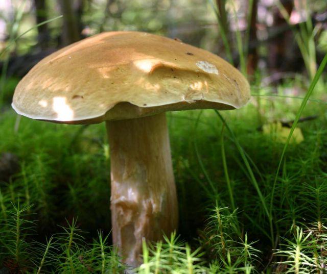 тому перематывать грибы хмао фото и названия казалось что