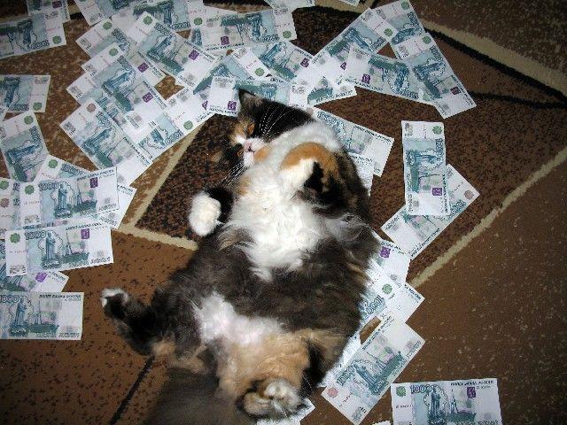 Смешные картинки деньги пришли, жизни прикольные