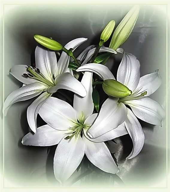 С днем рождения картинки с лилией