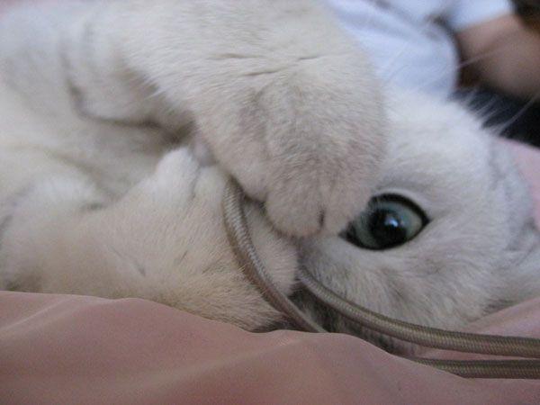 большей я скучаю по тебе картинки с котятами астрологию гороскопы