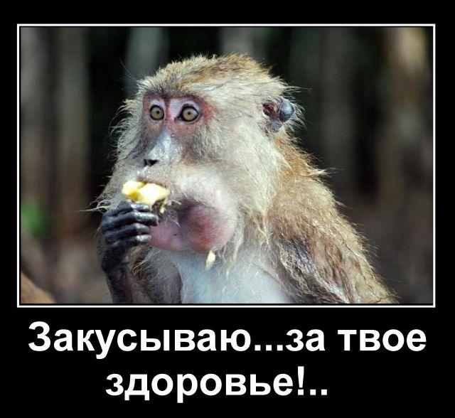 Именем дана, смешные картинки обезьян с днем рождения