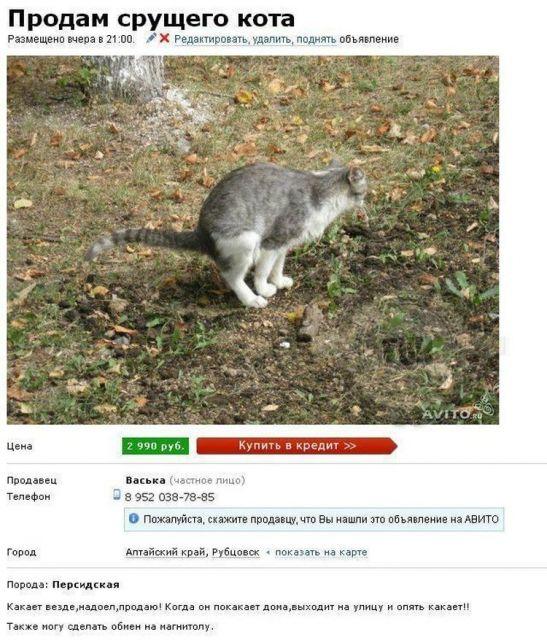 1dab18e0b1a9c Картинка: Самые смешные объявления о продаже животных на Авито