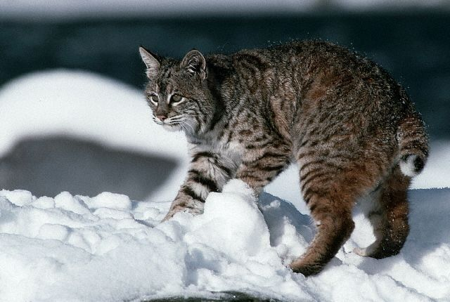Кошки и прочие забавные животные  - Страница 8 Img_4987759_701_0