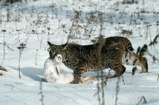 Кошки и прочие забавные животные  - Страница 8 Img_4987759_701_8