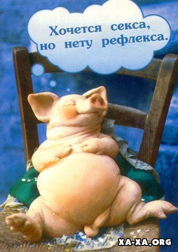 Для рисования, свинья картинка с надписью