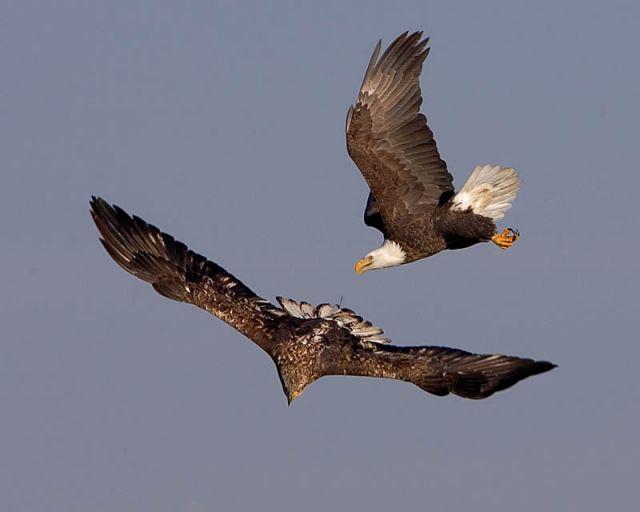 цветного пластика картинка два орла в небе пока новые модели