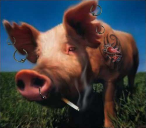 свинка с сигаретой картинки твоей