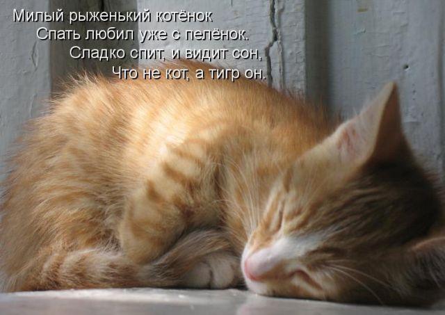 По традиции котов наделяют интуитивными и магическими способностями.