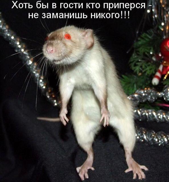 Детские, смешные картинки про мышей с надписями