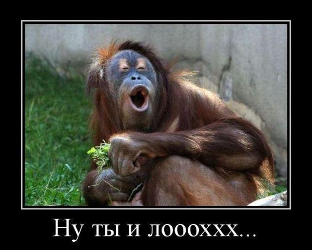 Приколы с обезьянами картинки с надписями, красивых