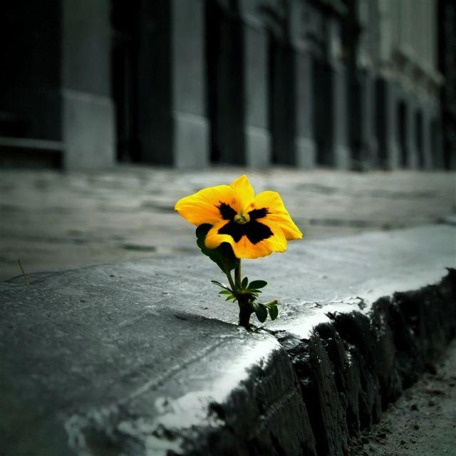 Открытки не скучай и не грусти
