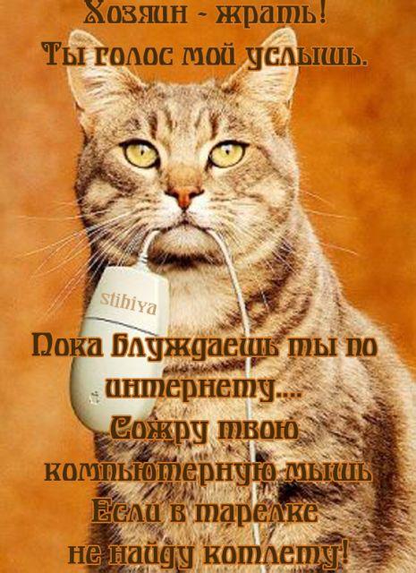 Картинки смешные про кошек в стихах, космоса планета
