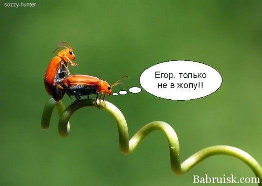 Дню нефтяной, жуки в картинках смешные