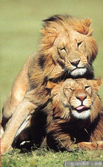 Сексуальная совместимость Льва и Стрельца