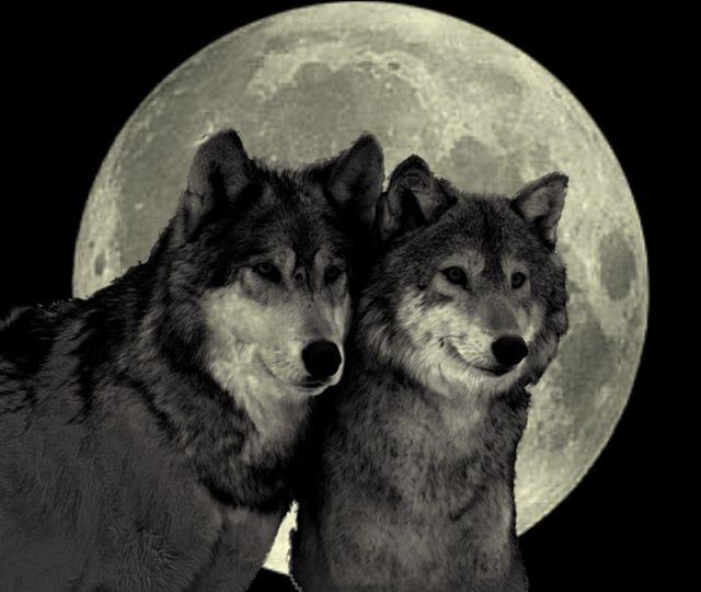 Душа волка открытка, картинки