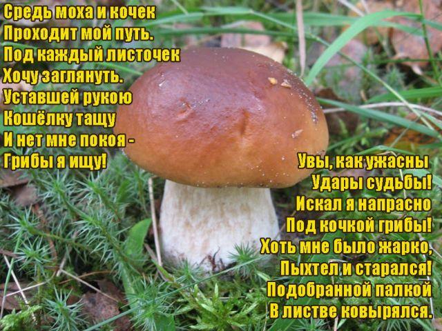Поздравление с днем рождения для грибника 33