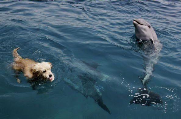 Dog riding dolphin