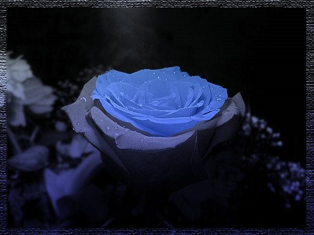 Мраморные розы ЗИЛ Эконом памятник Купола Новая Ладога