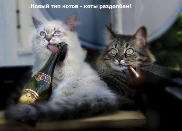 цитаты знаменитых смотреть а ты мой котик котик вязаные юбки