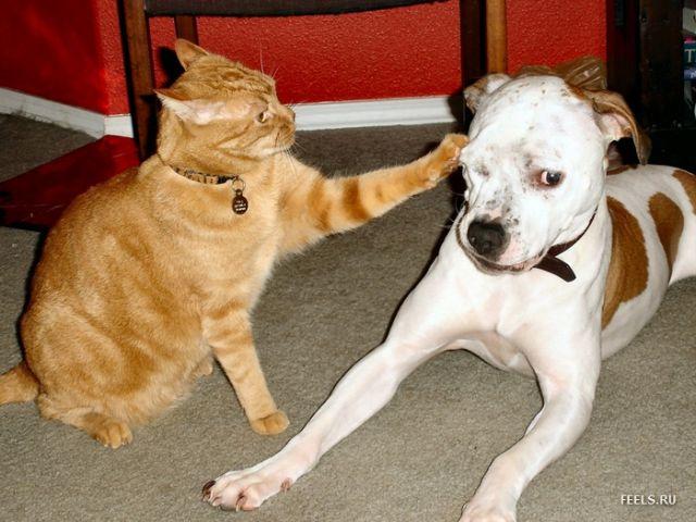 Игры драка кот с собаками