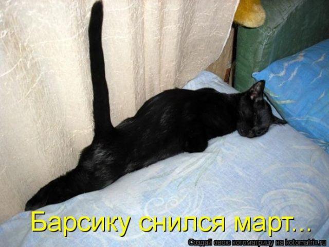 почему кошка подымает хвост и ссыт продать дом