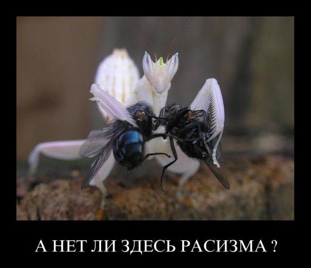 Картинка: лаком вскрыть сверху что ли?: http://live4fun.ru/joke/515747?gallery=1