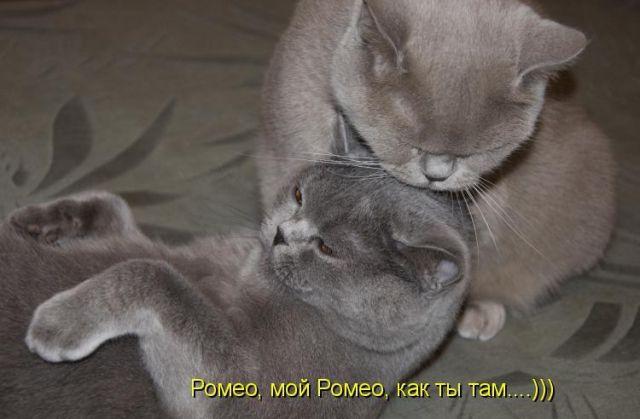 pochemu-kotenok-soset-paltsi-hozyayki