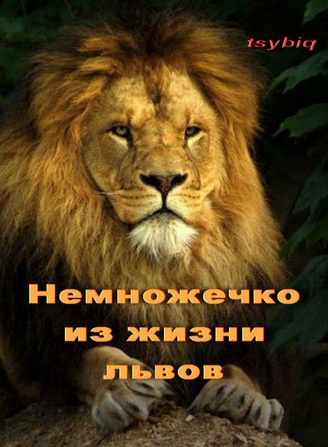 Прикольные поздравления львов 54