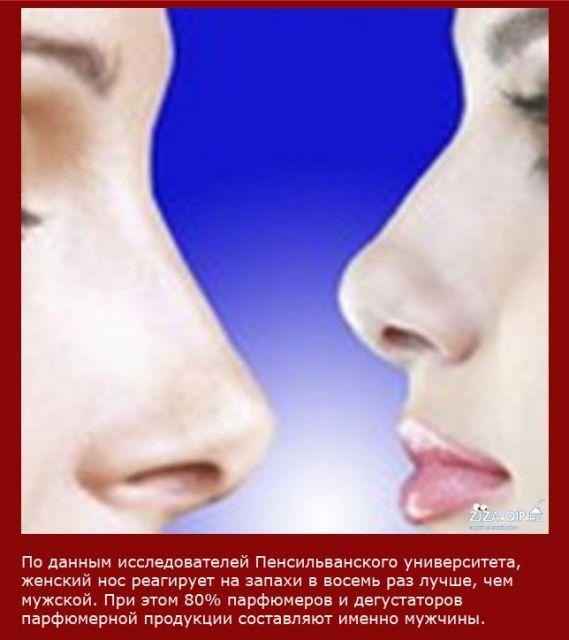 kakoy-nos-seksualniy-u-muzhchin