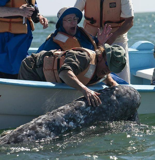 картинка кит целует лодку