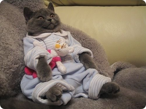 Халат для кота