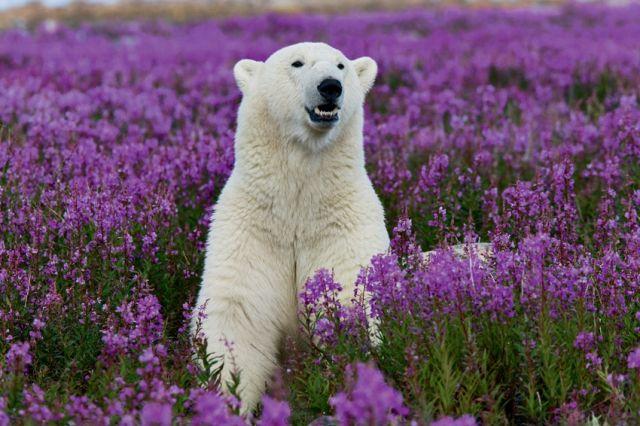 Животные арктики и антарктиды смотреть онлайн